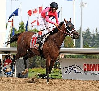 Wonder Gadot Canadian racehorse