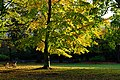 Wonderful Autumn View in Tyne Green Park - panoramio.jpg
