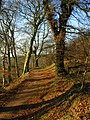 Woodland, Barnetts Demesne - geograph.org.uk - 1116959.jpg