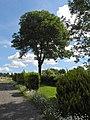 Wuppertal, Nächstebrecker Berg 4, Zufahrt, Laubkrone vor Schäfchenwolken.jpg