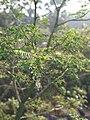 Xiaomi Mi A1 Portrait Mode Photo- Tree.jpg