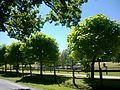 Yvelines La Boissiere-Ecole La Butte Ronde 23082016 - panoramio - rene boulay (2).jpg