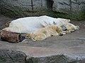 Zoo z03.jpg