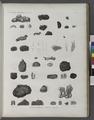 Zoologie. Zoophytes. Éponges charnues, Éponges à piquans (NYPL b14212718-1268613).tiff