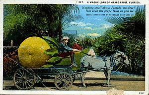 A wagon load of grapefruit, Florida