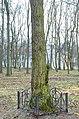 Бархат амурський в Гощанському парку.jpg