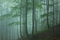 Бещадский лес.jpg