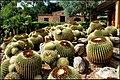Ботанический сад Пинья де роса - panoramio.jpg
