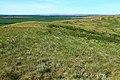 Вид с Мальгинской горы в северо-восточном направлении на Исянгуловские горы - panoramio.jpg