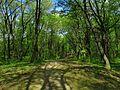 Голосіївський парк IMG 8447.jpg
