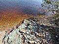 Ильмень за деревней Коростынь - вода, глина и камни.jpg