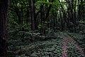 Казка у лісі.jpg