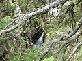 Каньонът на река Бъндерица,гледан от пътеката за х.Бъндерица - panoramio - Красимир Косев (1).jpg