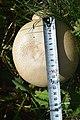 Наводницький парк Шампійони DSC 0352.jpg