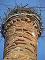 Новомалин .Руїни замку .Гніздо на вежі.jpg