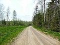 Отличная дорога к полигону, конец мая 2013 - panoramio (1).jpg