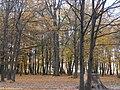 Парк відпочинку (старий парк над Стоходом), осінню 01.JPG