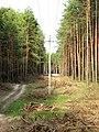 Просека. Санитарная рубка леса (E) - panoramio.jpg