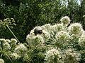 Растения, 26.07.2003 - panoramio (1).jpg