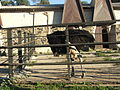 Рівненський зоопарк, 11.JPG