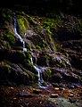 Тисо-Самшитовая роща (водопад) 01.jpg