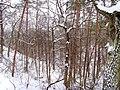 Чернечий ліс 31.jpg
