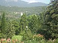 Ялтинський ботанічний сад.jpg