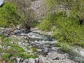 Ազատ գետը Գառնիի ձորում.jpg