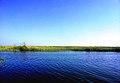 بحيرة مريوط (Mariout lake).jpg