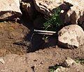 چشمه ای در مسیر آبشار - panoramio.jpg