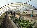 گلخانه کاکتوس دنیای خار در قم. کلکسیون انواع کاکتوس 19.jpg