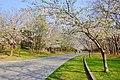 中島公園 (Nakajima Park) - panoramio (1).jpg