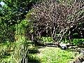 台北植物園 Taipei Botanical Garden - panoramio.jpg