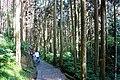 大學池步道 University Pond Trail - panoramio.jpg