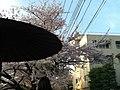 天神川綾小路 - panoramio.jpg