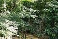 実篤公園 - panoramio (5).jpg
