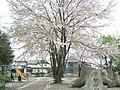 岩手県盛岡市月が丘の公園 - panoramio.jpg