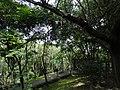 新北市樹林區潭底公園內。 - panoramio (1).jpg