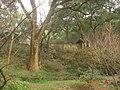 杭州.灵峰探梅(植物园) - panoramio (3).jpg