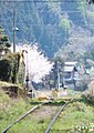 樽見鉄道の春 - panoramio.jpg