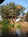 泰山樹屋.JPG