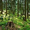 高天山草園にて 2012.5.14 - panoramio (1).jpg