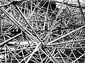 - complexity (1) - Flickr - nerovivo.jpg