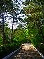 - panoramio (6738).jpg