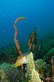 04-EastTimor-Dili-Rock Tasi-Tolu 40 (Cuttle-fish)-APiazza.jpg