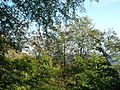 04 Rügen Königsstuhl 04 (6992809105).jpg