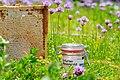 073 MesseErfurt Bienen 2013.jpg