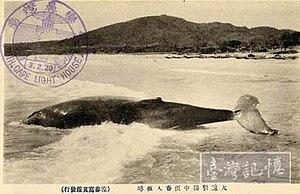 Cape Eluanbi - Whaling of Nan Wan