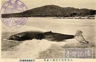 South Bay (Taiwan) - Landed humpback whale near Cape Eluanbi in 1920s
