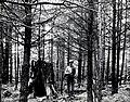 1955. Sitka spruce weevil study plot in 26 y.o. plantation. Crown Zellerbach forester Slim Schraeger. Clatsop Tree Farm, Clatsop County, Oregon. (32683664443).jpg
